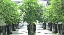 3 Top Marijuana Stocks to Watch in November