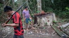 Illegal logging in Brazil turns Amazon into a powder keg
