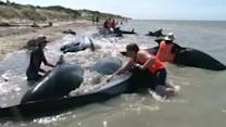 Stranded whales refloated in New Zealand