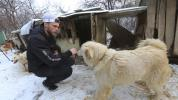 International movement to save dogs from South Korean meat farms gaining steam