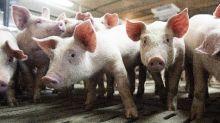 Deux milliards d'animaux vivants ont été expédiés dans le monde en 2017