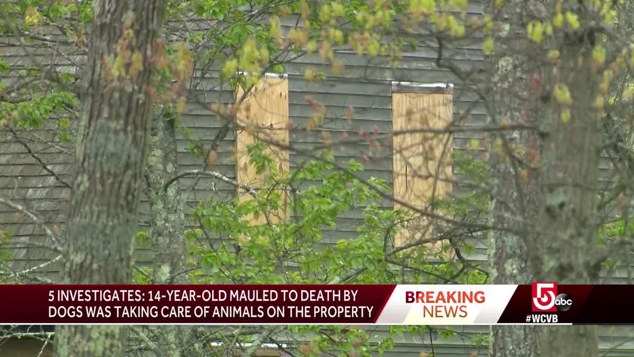 Teen attacked by dogs was taking care of animals, source