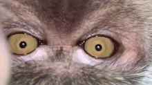 Mono se roba celular, se toma selfies