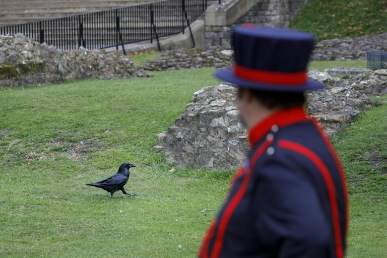 Skaife said that during lockdown the ravens were given more freedom to explore other parts of the Tower