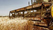 歷史次高!美國農業部:中國單日玉米採購量達近137萬噸