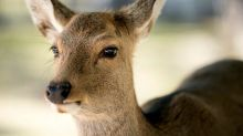 Japan gets deer-friendly bags to stop animals eating plastic
