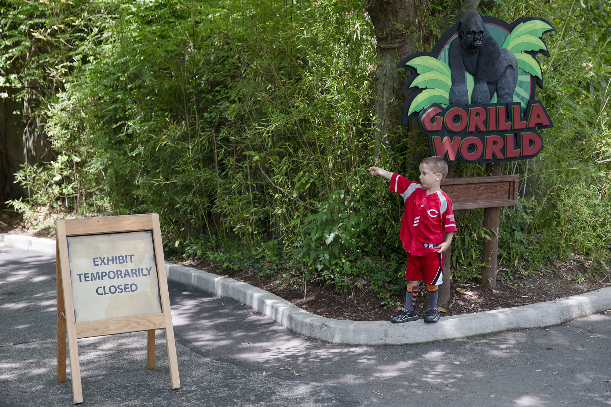 <p>Lucas Salcedo, 5, points toward the shuttered Gorilla World exhibit as he asks his father if they could enter at the Cincinnati Zoo & Botanical Garden, Sunday, May 29, 2016. <em>(AP Photo/John Minchillo)</em> </p>