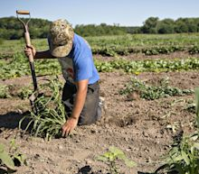 U.S. Farm Finances Worsen Despite Trump Trade War Aid