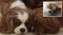 Pet suffers horrible illness after 'grieving' over loss of best friend