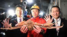 Auktion in Japan: Schneekrabbe erzielt Rekordpreis von 42 000 Euro