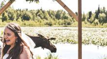Moose casually crashes wedding vows and the photos are hilarious