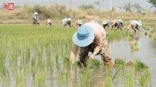 連大胃王吃播影片都被禁,中國缺糧危機有多嚴重