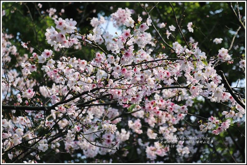 陽明山櫻花季-2018-03-68.jpg