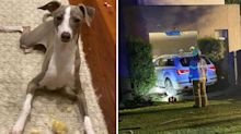 Frantic search for 'shaken' dog after car crashes into home