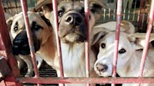 South Korea closes biggest dog meat market in run-up to Olympics
