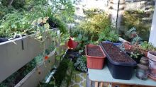 Winter greens and cuttings: September tips for balcony and urban gardeners