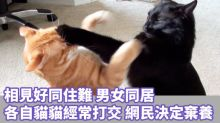 情侶同居 各自寵物卻未能和睦相處 主人想棄養?