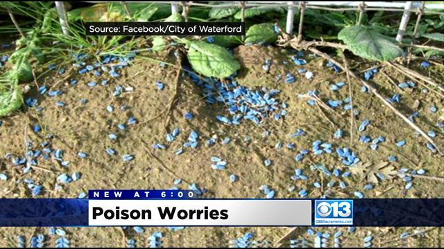 Vet: Dog Died From Modesto Irrigation District Rodent Poison