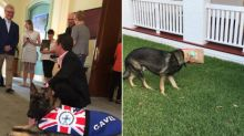 Police Dog Fired for Being Too Friendly Gets New Job That Fits Him Perfectly