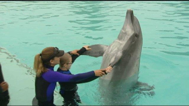 Dolphin trainer gives sick kids a big splash of hope