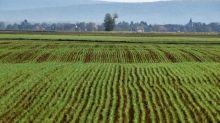"""Agriculture : il faut contrôler """"qui exploite les terres"""" pour """"garantir l'autonomie alimentaire"""" des Français"""