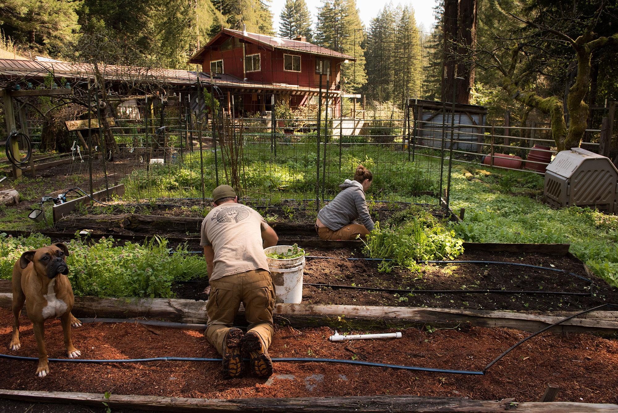 <p>The couple's Boxer, Zara, keeps them company as they weed the vegetable garden beds for the first time after winter this March. (Photo: Deleigh Hermes for Yahoo News) </p>