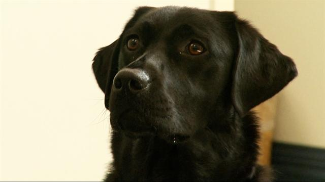 Dogs think like babies, researcher says