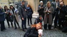 Brambilla porta maialino a Montecitorio: basta con fabbriche carne