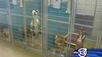 Overcrowded animal shelter makes plea for help