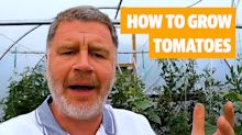 Rain or Shine: Top tips for growing your own tomatoes