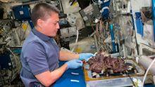 ¿Y si estamos llenando el espacio de bacterias?