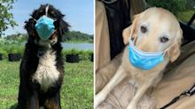 Warning for dog owners over disturbing face mask trend