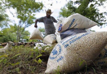 A farmer moves bags of provisions, donated by the United Nations World Food Programme (WFP) food reserves, during a distributing of food aid to families affected by the drought in the village of Orocuina, August 28, 2014. REUTERS/Jorge Cabrera