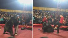Animal rights outcry after bear turns on trainer during performance at Russian circus