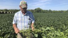 Farmers' loyalty to Trump tested over new ethanol rules they say favor Big Oil