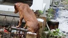 Devastating story behind photo of dog at grave