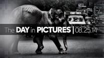 Day in Pictures: 8/25/14