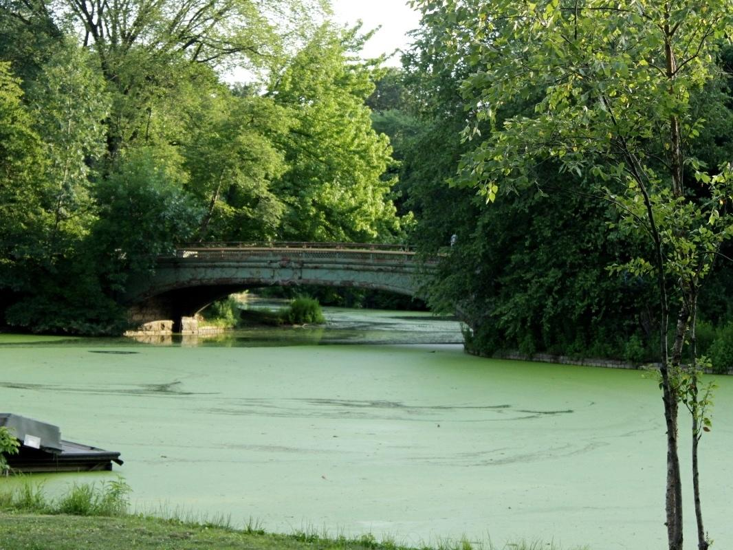 Parents say a cover of harmful algae on Prospect Park Lake is so bad children are mistaking it for grass and falling in, the CITY reports.