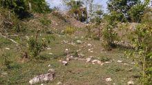 Encuentran más de 2 mil vestigios arqueológicos en la construcción del Tren Maya en Campeche