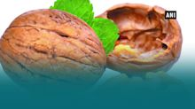 Walnut consumption may slow cognitive decline!