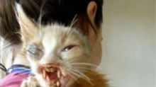 Una niña pequeña salva al gato 'monstruoso' que nadie quería