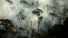 Fires in Brazil's Amazon rainforest surge in July, worst in recent days