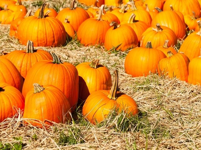 Pumpkin patches are all over Tucson and offering your favorite fall activities.