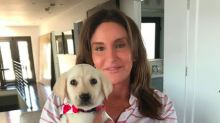 Caitlyn Jenner Finds Missing Dog Bertha Who Was Feared Dead After Winds Ripped Roof Off Home