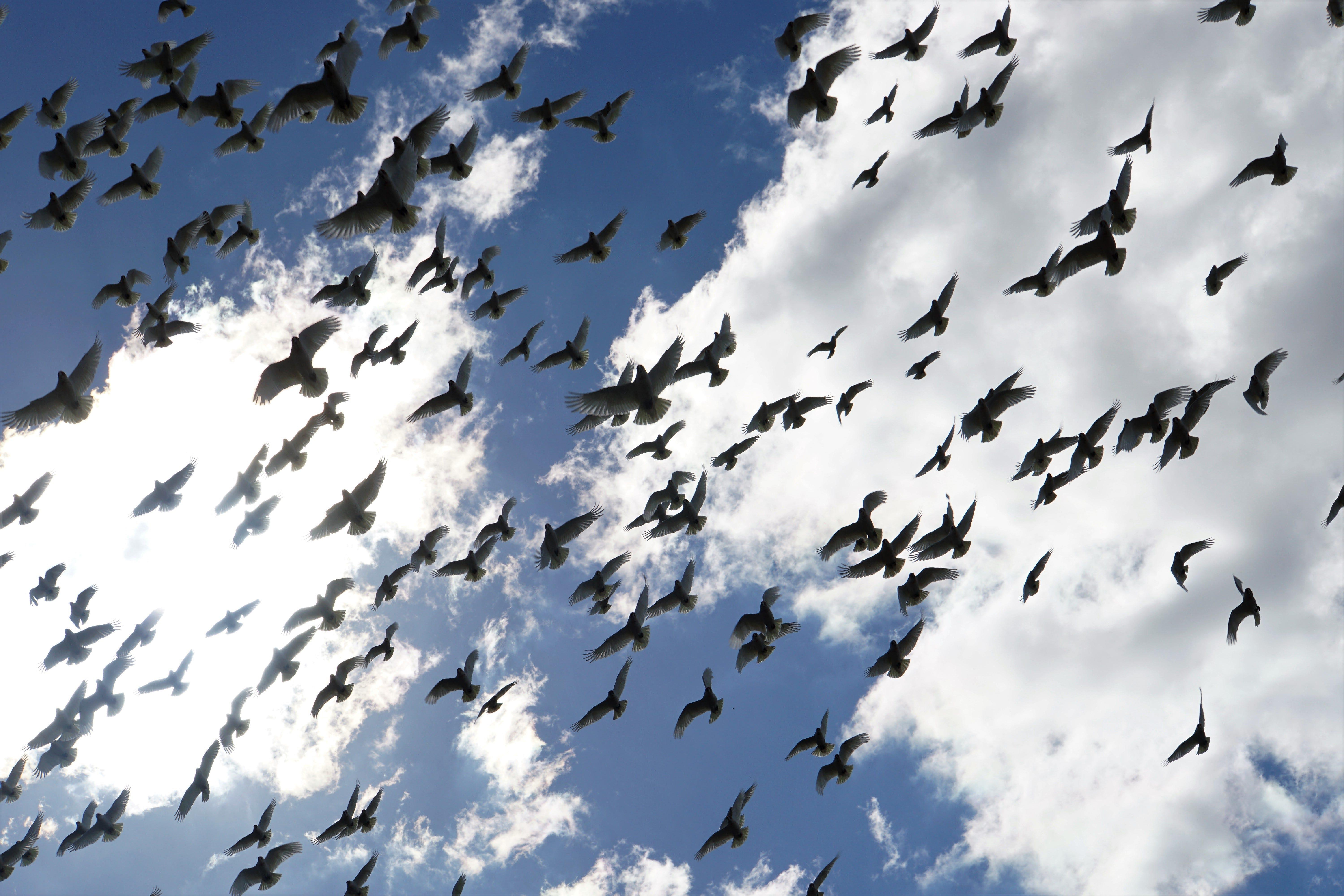Birds suspected to be poisoned fell out of sky in Australia