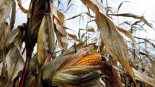Canada feeds European corn appetite as tariff war shrinks U.S. sales