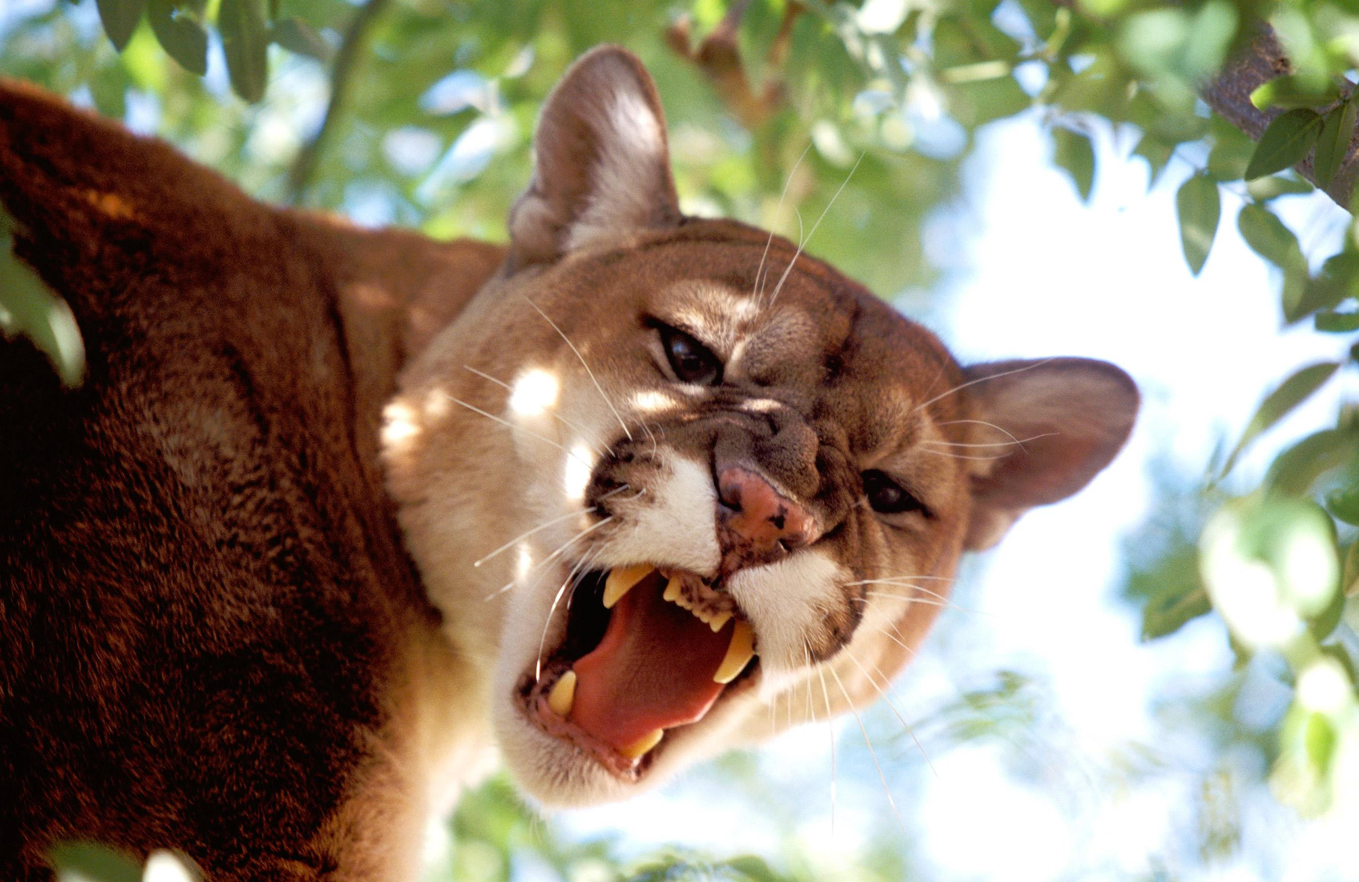 Colorado Man Who Survived Mountain Lion Attack by Killing