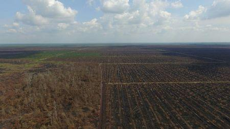 Aerial view of forest burned illegally at peatland area in Rokan Hulu