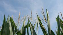 Tate & Lyle and Land O'Lakes SUSTAIN launch landmark sustainability initiative on 1.5 million acres of U.S. corn
