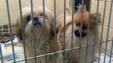 Vancouver councillor seeks ban on pet store sales of dogs, cats and rabbits
